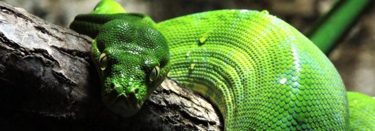 Заражение Python-пакетов