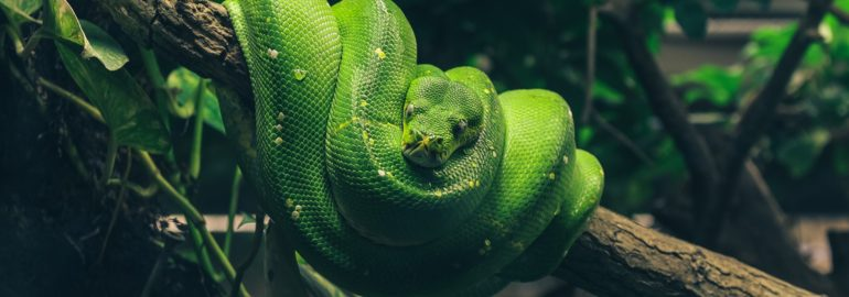 Python вошёл
