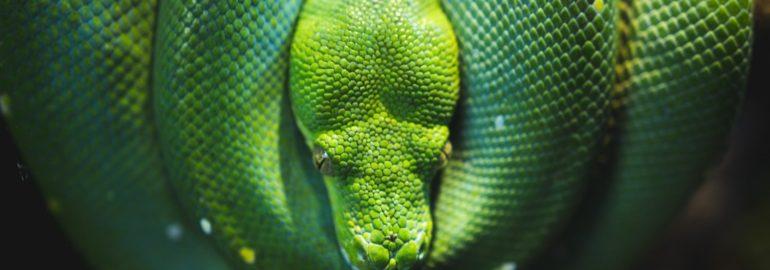 Из Python уберут служебные слова «master» и «slave» из-за политкорректности